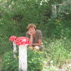 Надежда, 80, г.Черногорск