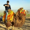 Furqat, 33, г.Самарканд